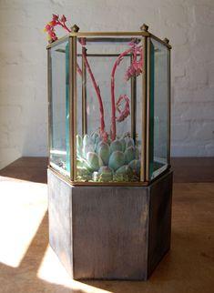 light fitting terrarium