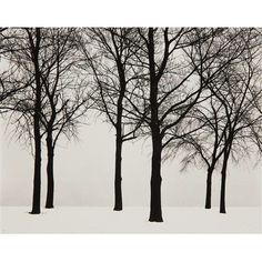 Check this out - I found this item up for auction on Invaluable and thought you might be interested. You can bid on it here: http://www.invaluable.com/auction-lot/HARRY-CALLAHAN-Chicago-Trees-in-Snow-,-1950-307-c-3534A169D3