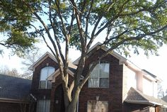 http://www.mastertreetrimming.com/   tree trimming/tree removal,stump grinding and weekly lawn service