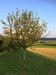 Felder, Plants, Apple Tree, Heaven, Landscape, Plant, Planting, Planets