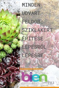 Kertészkedés- kattints a linkre és olvasd el a teljes cikket Plants, Plant, Planets