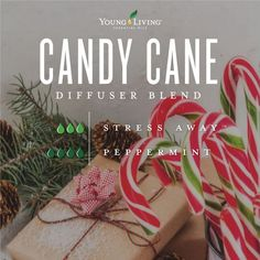 Stress Away Essential Oil Blend Get in the holiday spirit with our Candy Cane diffuser blend! It's made out of 2 drops of Stress Away and 4 drops of Peppermint essential oils. Essential Oils Christmas, Yl Essential Oils, Essential Oil Diffuser Blends, Young Living Essential Oils, Essential Oil Combinations, Young Living Oils, Diffuser Recipes, Candy Cane, Stress