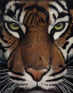 Tiger Tiger by Pastelmagic83 on DeviantArt