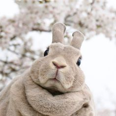 said: If u were an rabbit what will u look like ? Answer: That's an excellent question. Nature Animals, Animals And Pets, Baby Animals, Funny Animals, Cute Animals, Cute Baby Bunnies, Funny Bunnies, Beautiful Rabbit, Rabbit Art