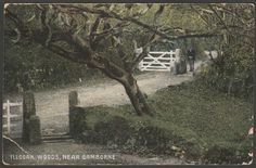 Illogan Woods, near Camborne, Cornwall, 1909 - Empire Series Postcard Old Pictures, Old Photos, Postcards For Sale, Connemara, Cornwall England, St Ives, Historical Images, Family History, Woods