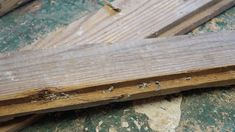 Whether you are working with barn wood, old flooring, or pallet wood, check out this lesson to learn how to recondition wood for a woodworking project!