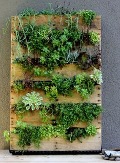 Recycled Pallet Vertical Garden - Very little room on your urban porch or backyard? How about maximizing the space you have by growing up? I'll be using a pallet sitting in my back yard to plant garden center annuals or possibly native succulents. Jardim Vertical Diy, Vertical Garden Diy, Vertical Gardens, Small Gardens, Diy Pallet Vertical Planter, Pallett Planter, Vertical Planting, Recycled Pallets, Wooden Pallets