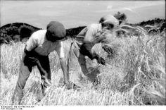 Bundesarchiv Bild 101I-468-1419-16A, Bauern bei der Heuernte
