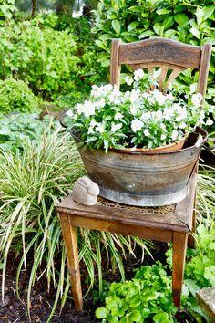 Weiss blühende Pflanzen gehören auch in diesem Jahr zu meinen Favoriten. In Kombination mit meinen schrulligen Zinkgefäßen wirken sie besonders schön. Der Gestrüppkranz auf der Zinkwanne verdeckt den unattraktiven Pflanztopf gut. Den Hornveilchen konnten die frostigen Tage wenigstens nichts anhaben. Die drei Buchsbaumstämmchen hatte ich mir im April vom Flohmarkt mitgebracht, in Zinkeimer gestellt und passende …
