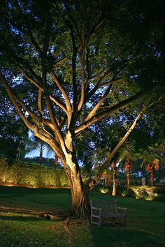26 Awesome Garden Lighting Design Ideas And Remodel. If you are looking for Garden Lighting Design Ideas And Remodel, You come to the right place. Here are the Garden Lighting Design Ideas And Remode. Garden Lighting Tips, Outdoor Tree Lighting, Outdoor Lighting Landscape, Landscape Lighting Design, Outdoor Trees, Backyard Lighting, Garden Lighting Modern, Cheap Lighting, String Lighting