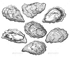 Buy Oyster Shell Set by vectortatu on GraphicRiver. Oyster shell vector set, hand drawn fresh oysters isolated on white background for cooked delicacies or deli. Ink Illustrations, Illustration Art, Shell Drawing, Seashell Tattoos, Textiles Sketchbook, Rose Gold Texture, Free Business Card Templates, Templates Free, Seashell Painting