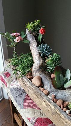 Succulent barnwood planter