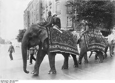 Elephants on parade, Berlin (1926)