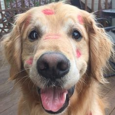 The only kind of marks you should ever leave on your dog. I can see why your mamma couldn't resist kissing that face!