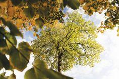 Das macht die LICHTUNG aus: relaxen unter dem Blätterdach.