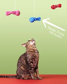 Cats Toys Ideas - Here are two different, super easy DIY cat toys that dont require any sewing. The first tutorial is for those colorful felt feathers above. All you need is - Ideal toys for small cats Diy Cat Toys, Dog Toys, Baby Toys, Cat Crafts, Animal Crafts, Kids Crafts, Gifts For Pet Lovers, Pet Gifts, Cute Kittens