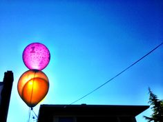 Walking Frankie this morning and came across these awesome backlit balloons.