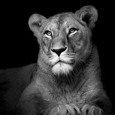 Spectacular Black and White Animal Portraits of Lukas Holas
