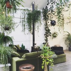 Urban Jungle Bloggers (@urbanjungleblog) • Photos et vidéos Instagram