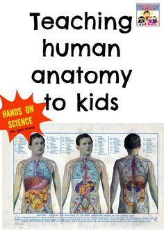 Human anatomy ideas for kids