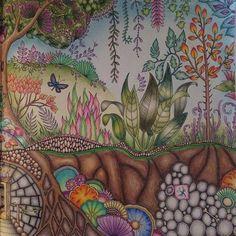 #johannabasford #enchantedforest #polychromos #fabercastell #addictedtocoloring #adultcoloring
