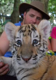 tiger cub - Animal Encounters - Dade City's Wild Things