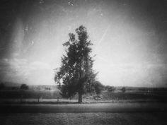 https://flic.kr/p/FMP8zP | A Tree (Michoacán, México. Gustavo Thomas © 2015) | A Tree  (Michoacán, México. #Photograph by Gustavo Thomas © 2015)