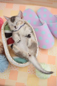 These cute animal photos will make you want to go out and get a cat for your house immediately. This kitten is a big fan of cat naps.