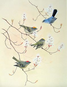 bird illustration - Google'da Ara