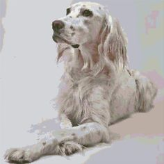 Cross Stitch | English Setter xstitch Chart | Design