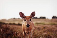 Bright Eyes - PERFECTWRONG | via Tumblr