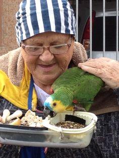 Papagaio no meu caminho Parrot on my way