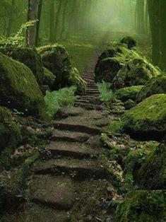 221442280eb2a6577a16f6841d4a6d1f.jpg (500×667) - Sherwood Forest