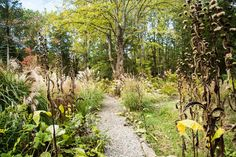 The Good-for-Nothing Garden | nytimes.com
