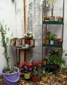 jardim em latas ou jardim inacabado