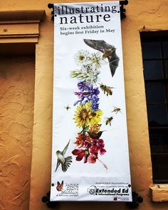 Birds 🐦 and bees 🐝 and flowers 🌺 and bats 🦇 in Pacific Grove. #pacificgrove #naturalhistorymuseum #bumblebee #hummingbird #bats #nature #museum #smalltown #montereybay #california #montereybaylocals - posted by Oscar Uribe https://www.instagram.com/oscarasilomar - See more of Monterey Bay at http://montereybaylocals.com
