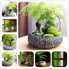 House Plants Decor, Plant Decor, Bonsai Garden, Garden Pots, Bonsai Plante, Asparagus Plant, Jardin Decor, Indoor Water Garden, Landscaping