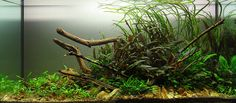 120cm crypt only by George Farmer, via Flickr, aquascape