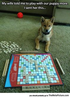 haha,memes-Scrabble -Denim -----(Don't mind the tags)lol haha memes memer meme ROFL relatable relate memeing funny funniestmemes fun Funny Dogs, Funny Animals, Cute Animals, Funny Memes, Funniest Memes, Animal Memes, 9gag Funny, Animal Humor, Love Dogs