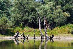Natur pur - so herrlich sind Kroatiens Nationalparks Bild 11 - Reisen