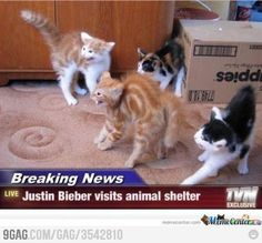 Justin Beiber Visits the Animal Shelter.... Hahaha a dirty joke just popped in my head.... Even p____ doesn't like jb...
