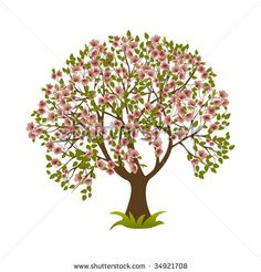 Blossoming cherry tree. Vector illustration.