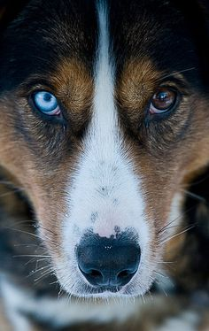 I would love to photograph Husky Dogs. Please check out my website Thanks.  www.photopix.co.nz