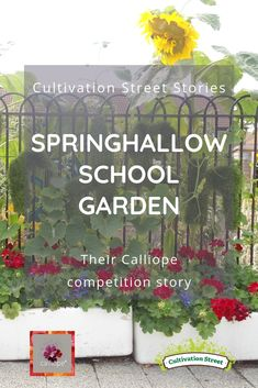 Cultivation Street Story looking back at the 2018 Judges Choice Winner in our Calliope Colour My Life competition category, Springhallow School Garden. Read their Calliope competition story. Garden Projects, Garden Ideas, Artificial Turf, Geraniums, Vegetable Garden, Competition, Judges, Colour, Street