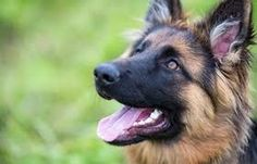 Dog Training Tips that could assist with the training essential for a well adjusted family dog...