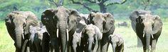 SNP Wildlife reizen en safari's  Reizen waarbij het bespieden van groot wild centraal staat. Op zorgvuldig gekozen plekken en onder begeleiding van experts. Uw geduld wordt beloond met ontmoetingen en fotoshoots met spectaculaire diersoorten.