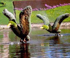 flying mallards creative hedges
