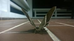 Moth. Close-up with my Nokia Lumia 1020