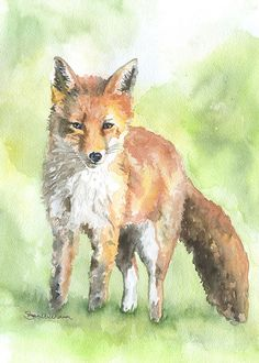 Red Fox aquarelle Fine Art Print 5 x 7 par SusanWindsor sur Etsy