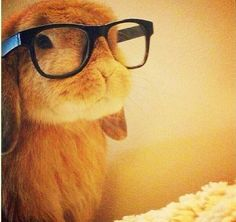 Really cute bunny